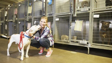 What Are Some Good Animal Shelters Located in Wisconsin?
