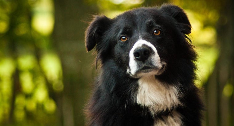 good-boy-dog-names