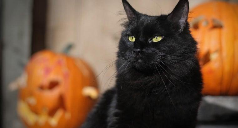 good-halloween-cat-names