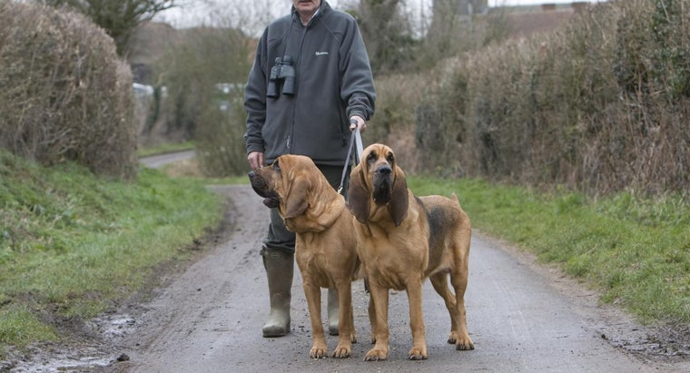 good-names-bloodhound