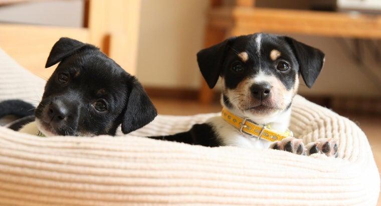 good-names-boy-puppies