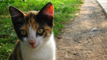 What Are Some Good Names for Calico Cats?
