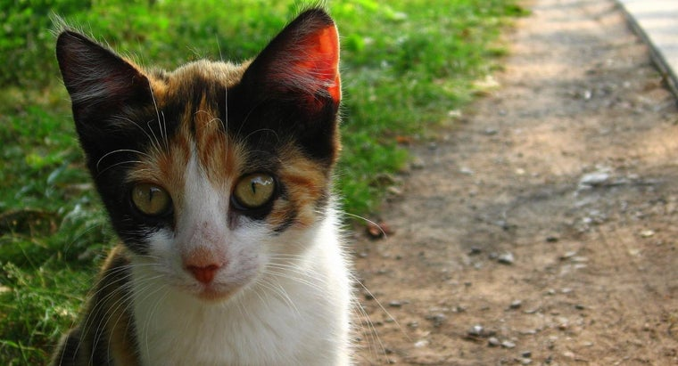 good-names-calico-cats