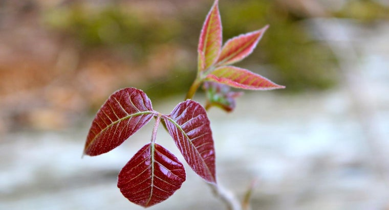 good-natural-treatments-poison-ivy