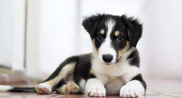 good-puppy-names-girls