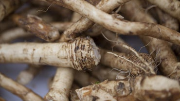 What Is a Good Substitute for Horseradish?