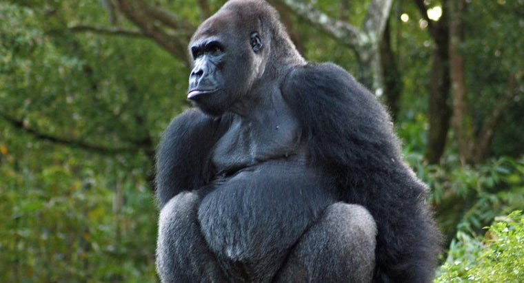 gorillas-protect-themselves