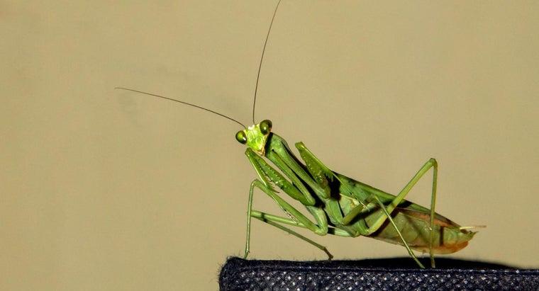 characteristics-grasshoppers