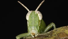 What Is the Function of the Mouth in a Grasshopper?