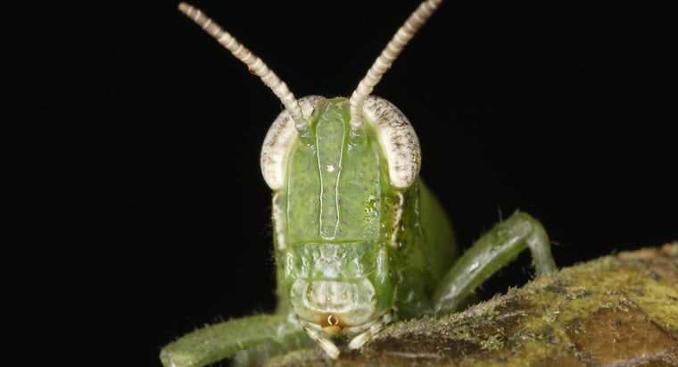 function-mouth-grasshopper