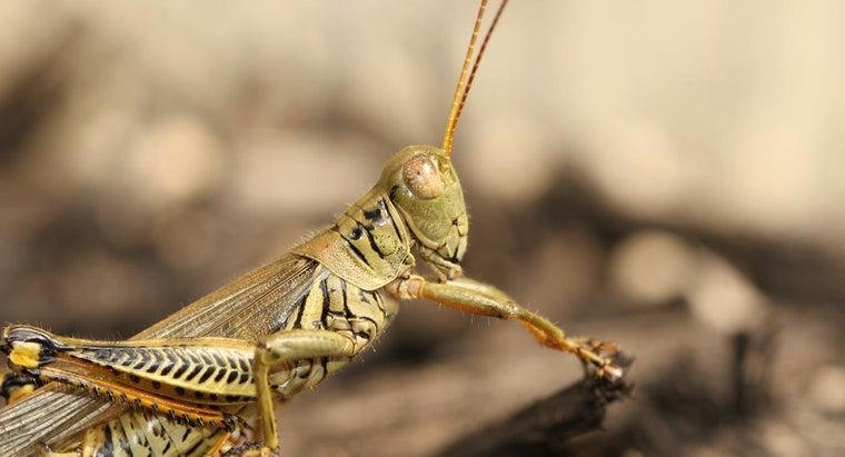 grasshoppers-bite