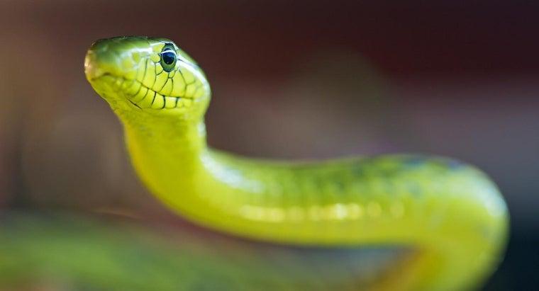 green-mamba-snake
