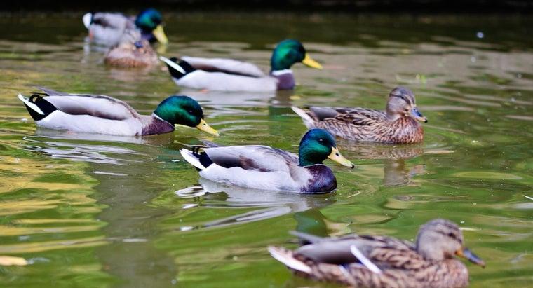 group-ducks-called