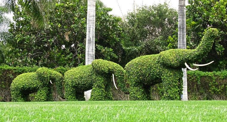 group-elephants-called
