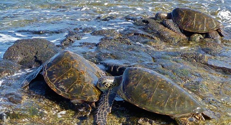 group-sea-turtles-called