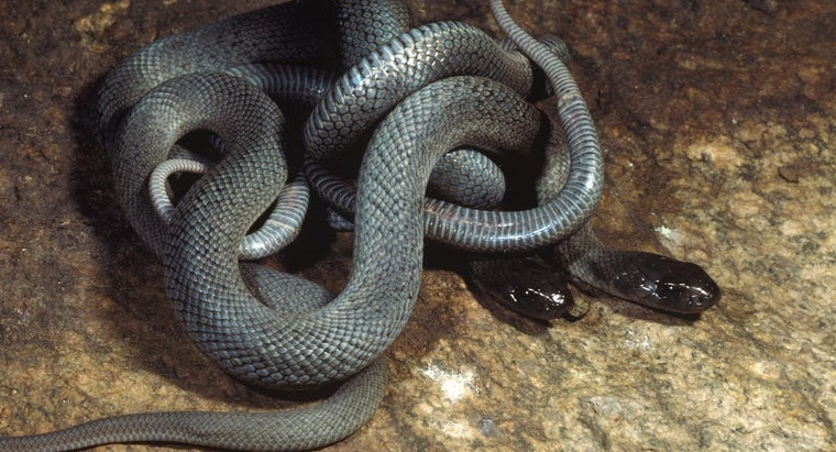 group-snakes-called