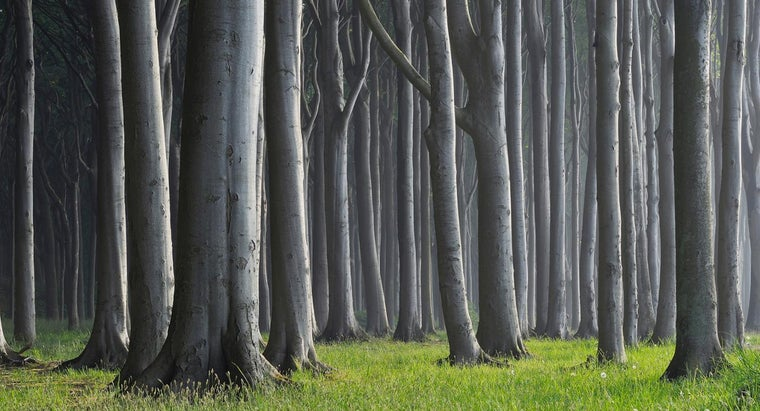group-trees-called