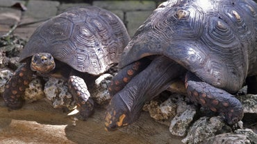 What Is a Group of Turtles Called?