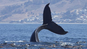 What Is a Group of Whales Called?