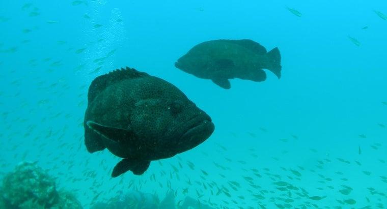 grouper-taste-like