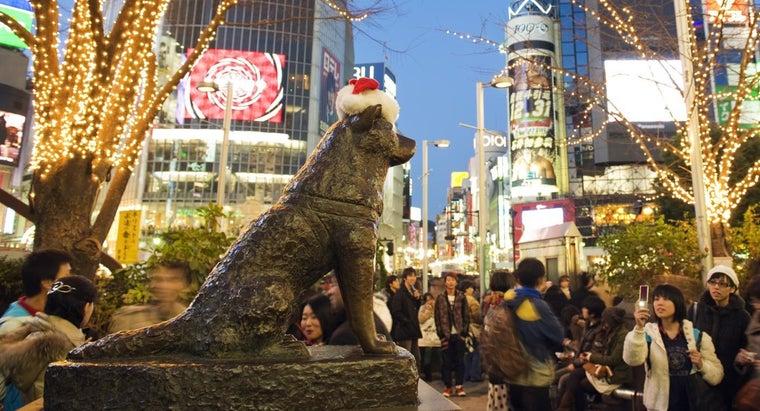 hachiko-breed-dog