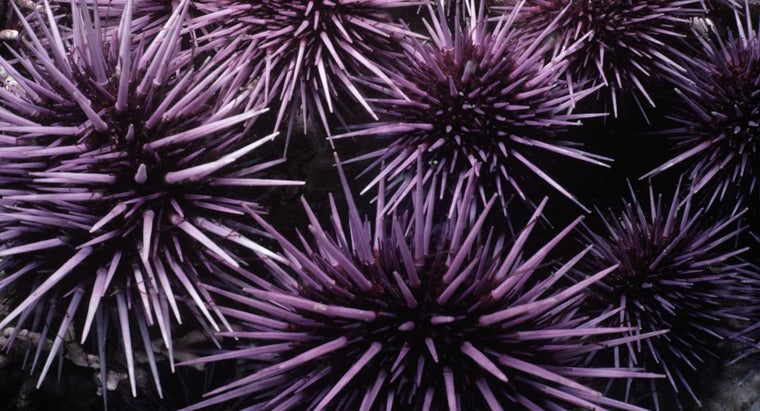 happens-after-person-gets-stung-sea-urchin