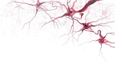 What Happens When the Brain Is Deprived of Oxygen?