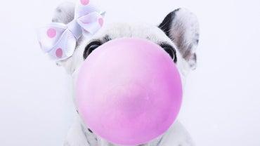 What Happens If a Dog Eats Gum?
