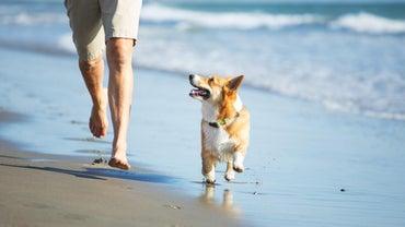 What Happens If a Dog Eats Sand?