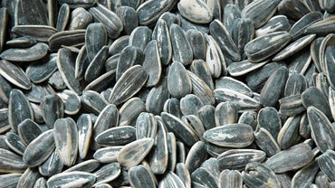 What Happens If You Eat Sunflower Seed Shells?