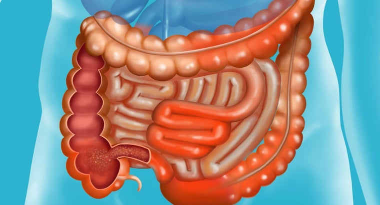 happens-small-intestine