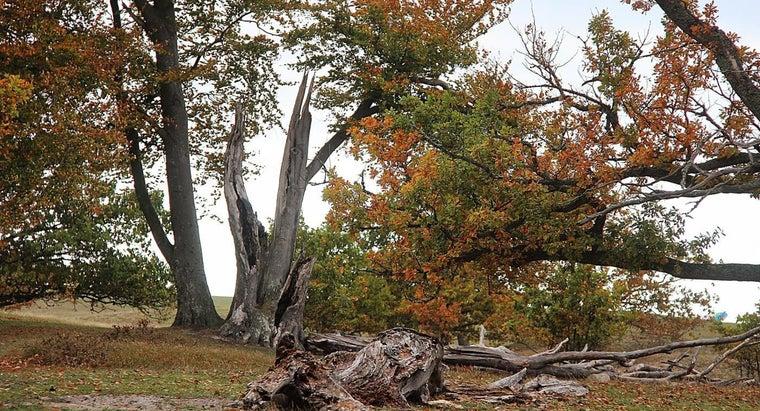 happens-tree-struck-lightning