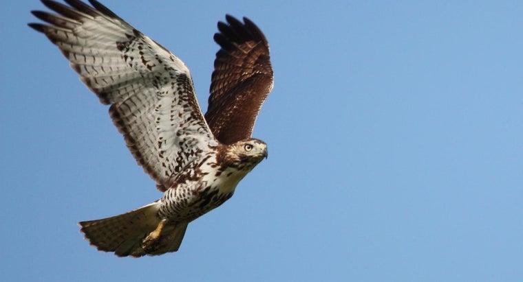 hawks