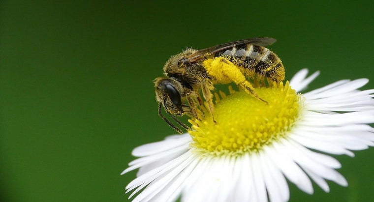 health-benefits-bee-pollen