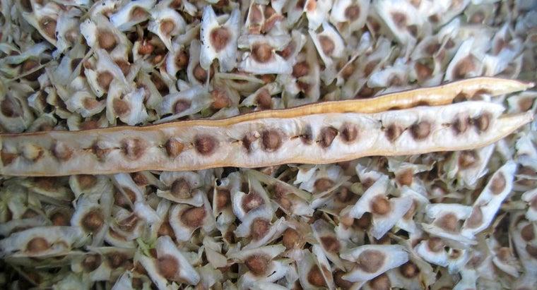 health-benefits-moringa-seeds