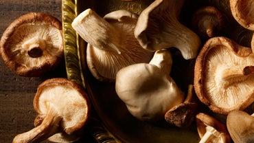 What Are the Health Benefits of Shiitake Mushrooms?