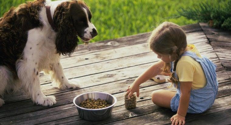 healthiest-dog-food-brands