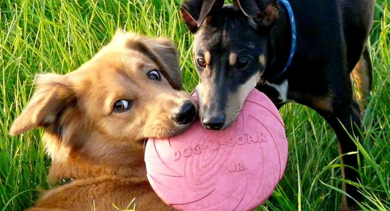 heartworms-contagious-other-dogs