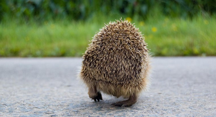 hedgehogs-eat-drink
