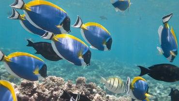 What Are Herbivorous Fish?