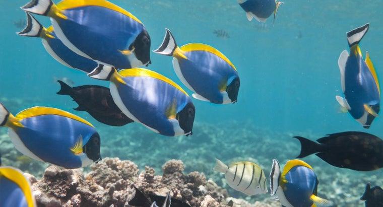 herbivorous-fish