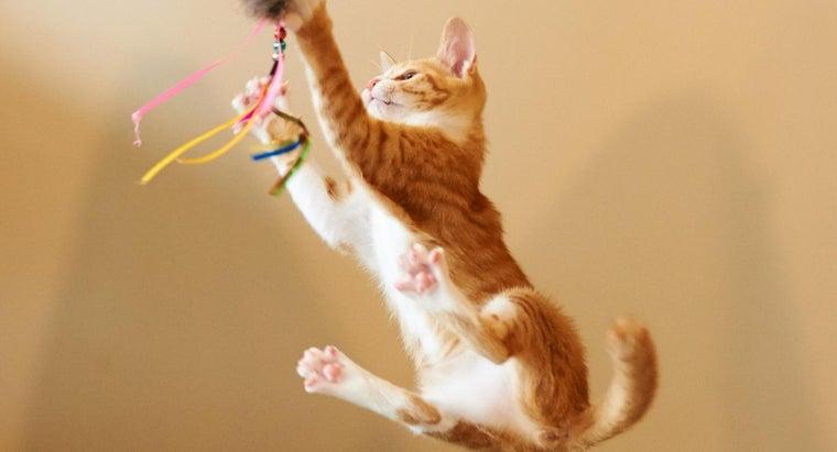 high-can-cat-jump