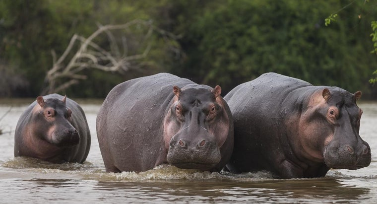 Why Was the Hippo Hunted in Ancient Egypt? | Reference com