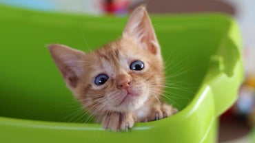 What Are Some Home Remedies for Kitten Diarrhea?
