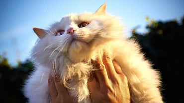 What Are Some Home Remedies to Treat Mange on a Cat?