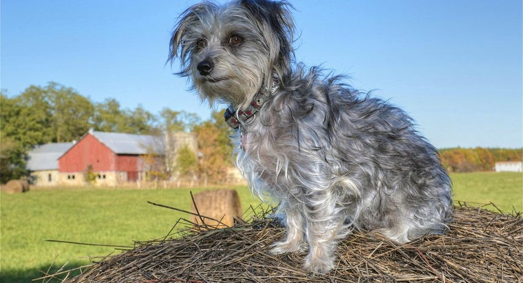 home-remedy-skin-mites-dogs
