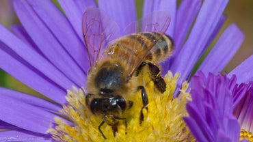What Is a Honey Bee's Habitat?