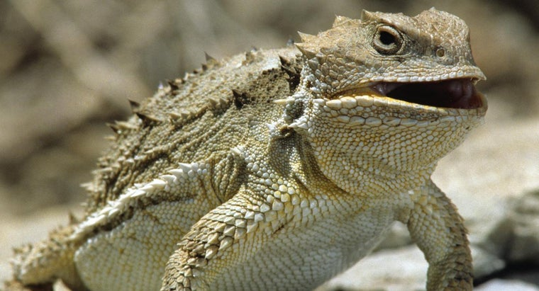 horned-lizards-protect-themselves