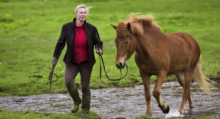 horse-symbolize