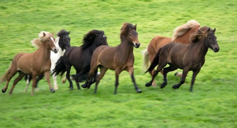 horses-breed